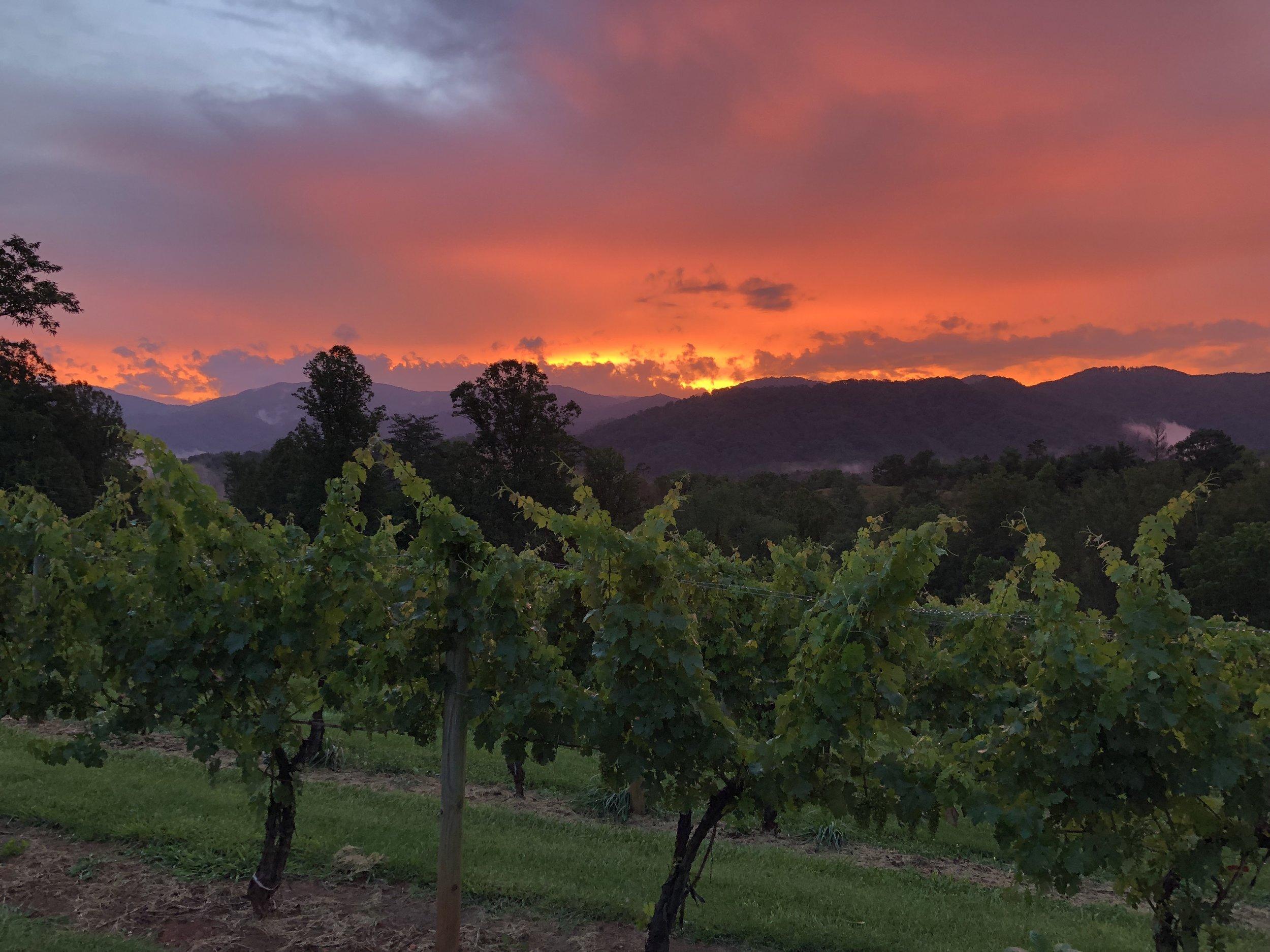 Sunset over the vineyard, 24 June 2019