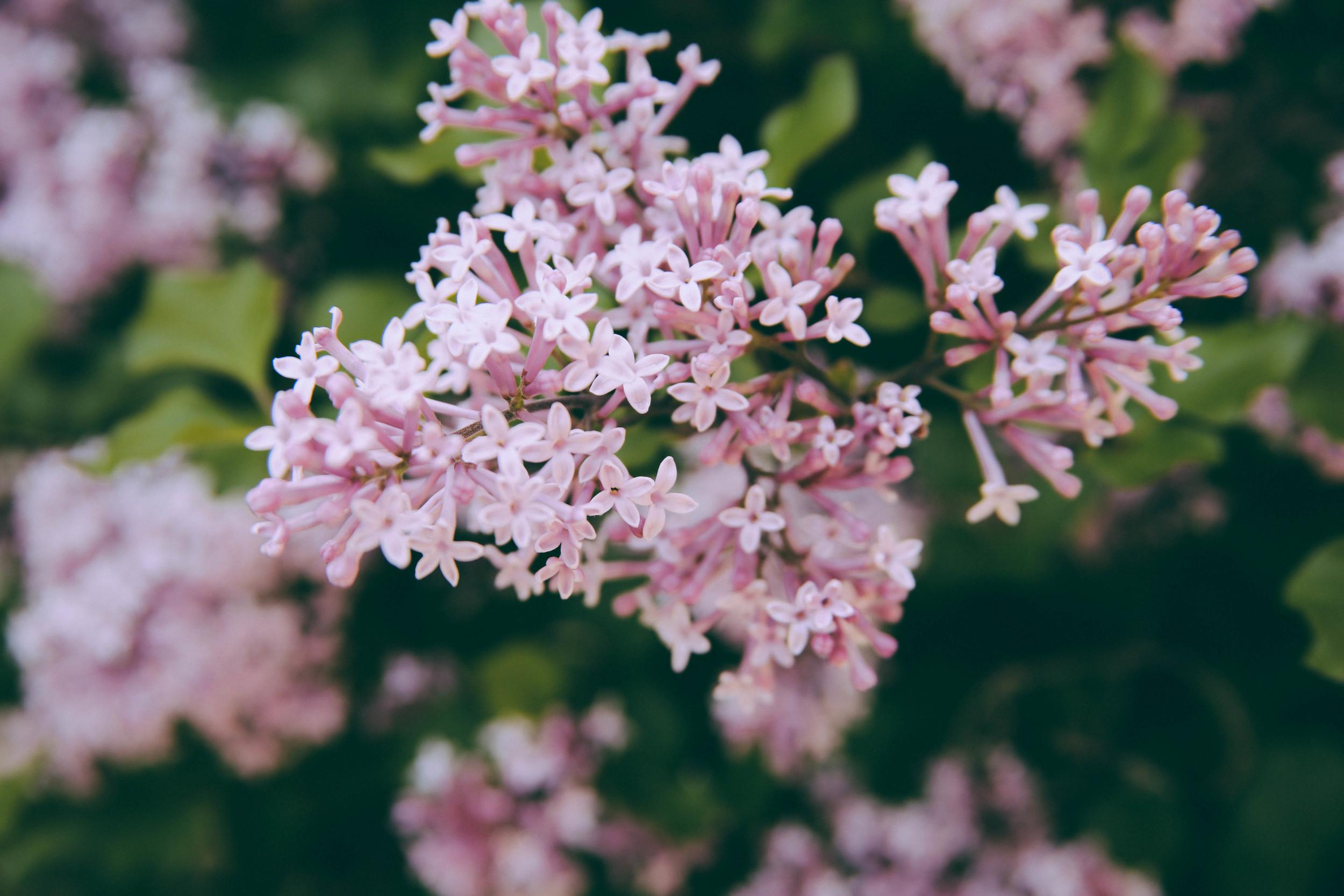 Ohio Flowers-4.jpg