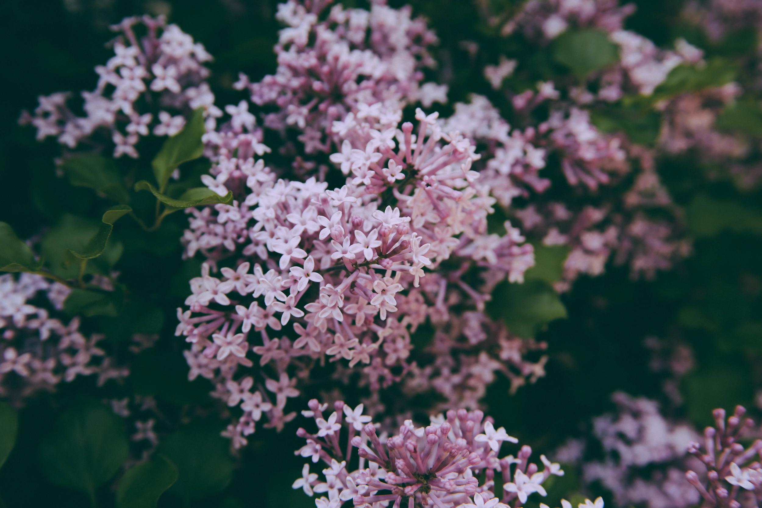 Ohio Flowers-2.jpg
