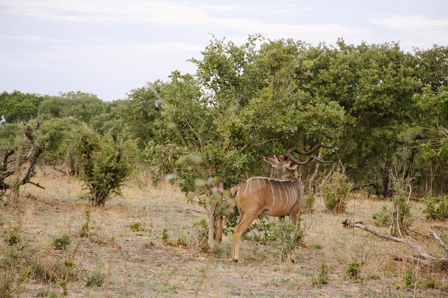 Africa - LindsayBrown -WEB-3948.jpg