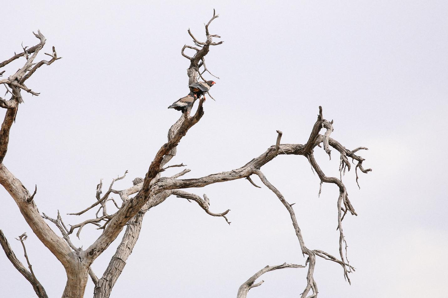 Africa - LindsayBrown -WEB-4337.jpg