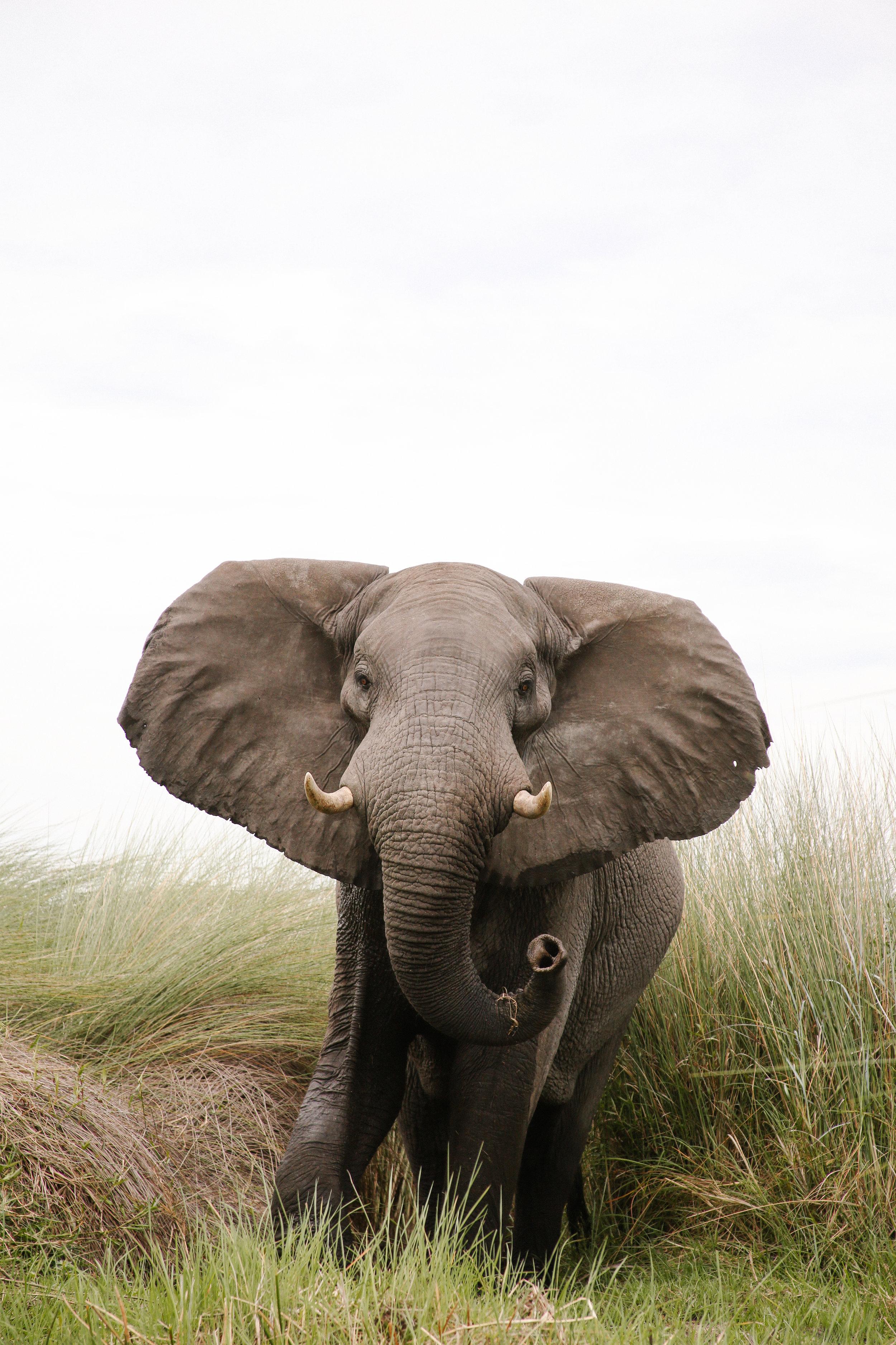 Africa - Lindsaybrown -WEB-5280.jpg