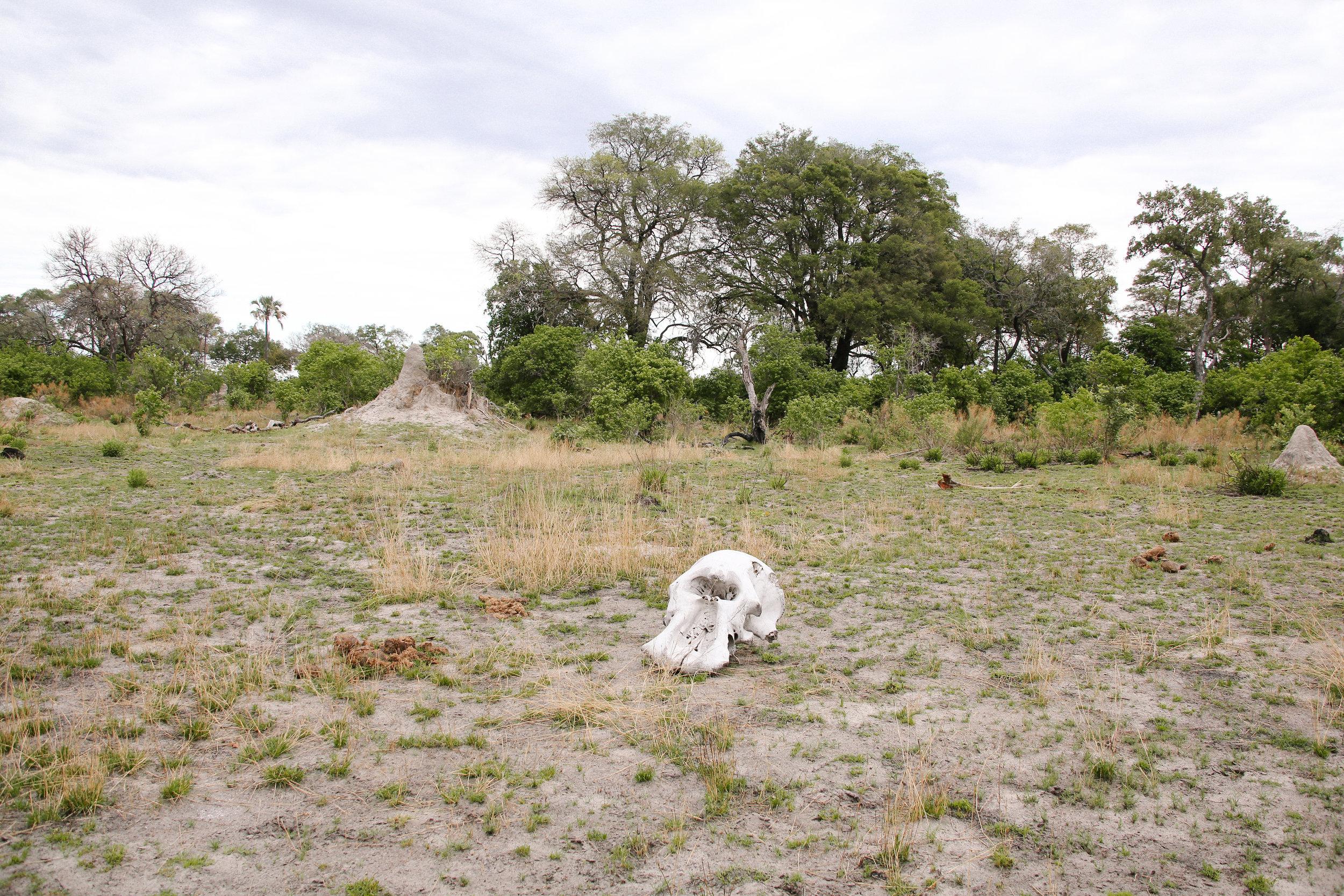 Africa - Lindsaybrown -WEB-5605.jpg