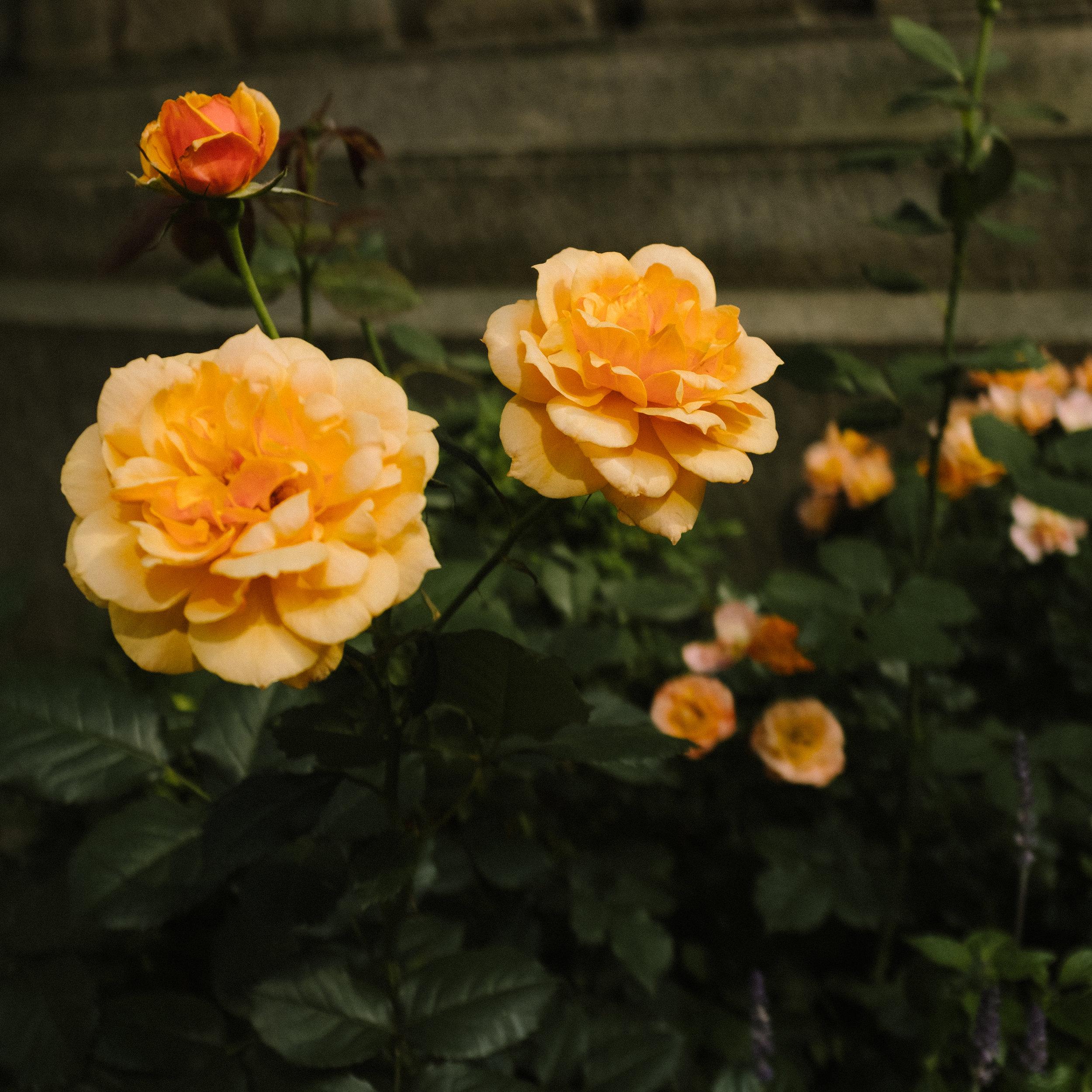 bryant park flower-5694.jpg