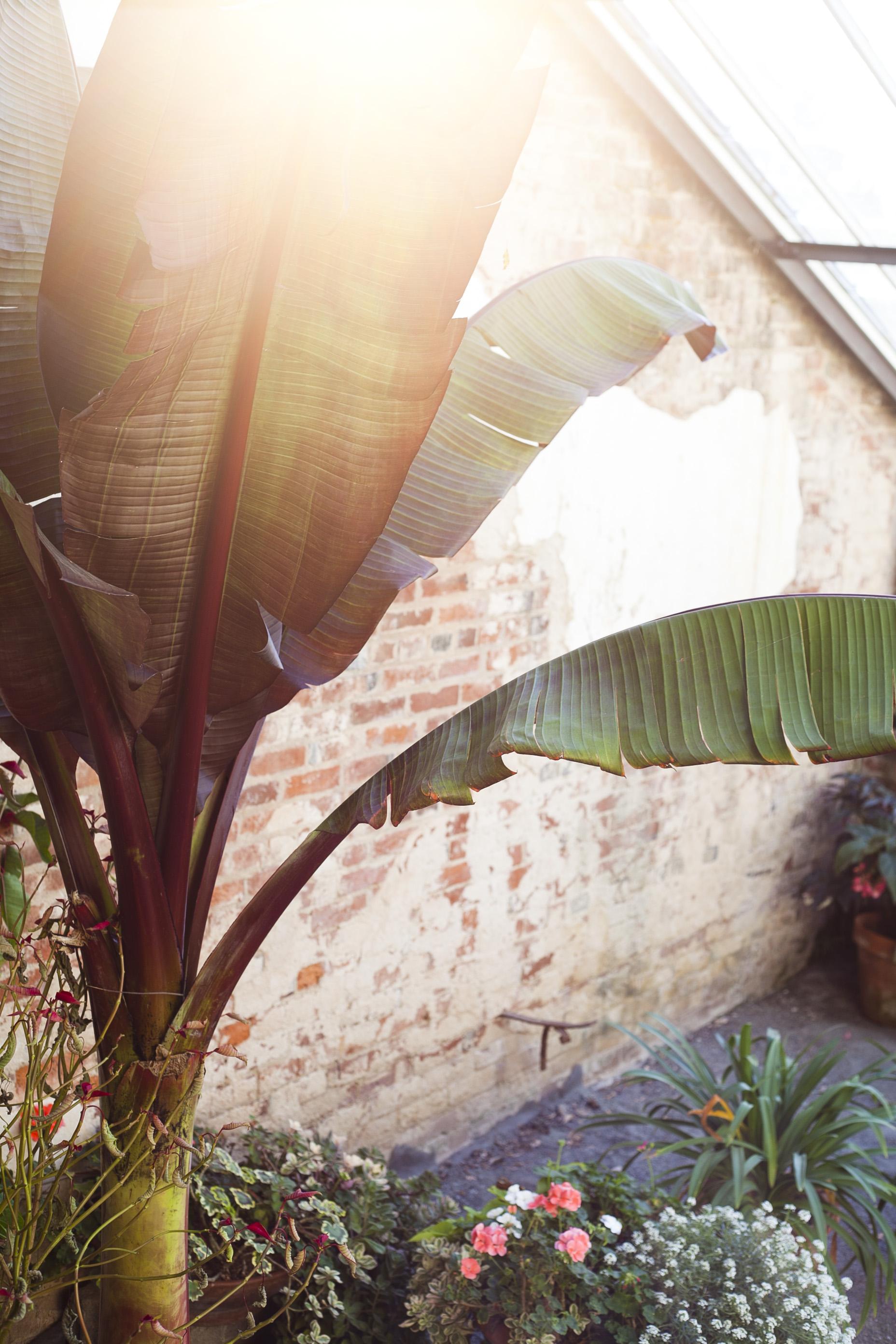 oatlands plantation, greenhouse