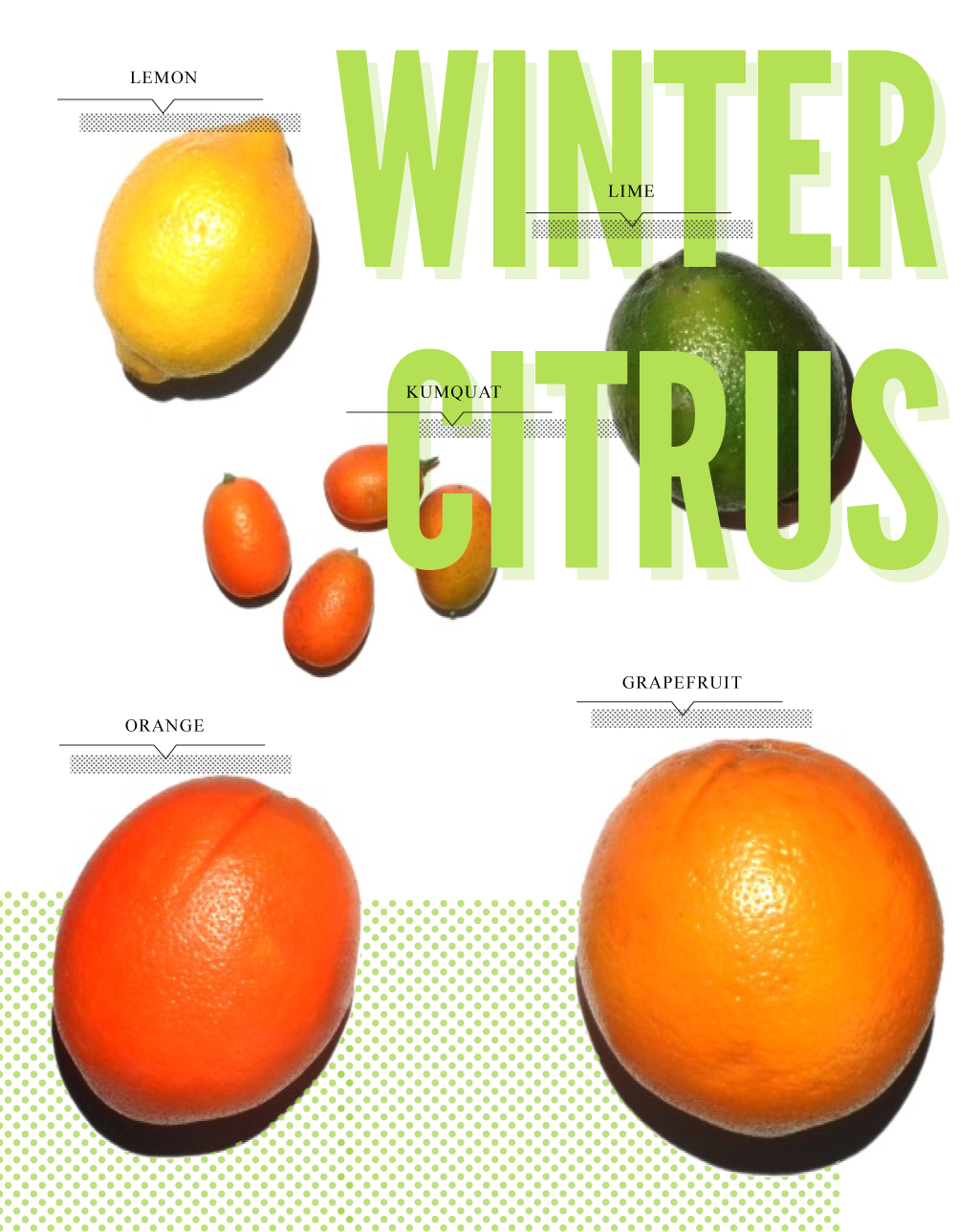 winter citrus, hp sprout