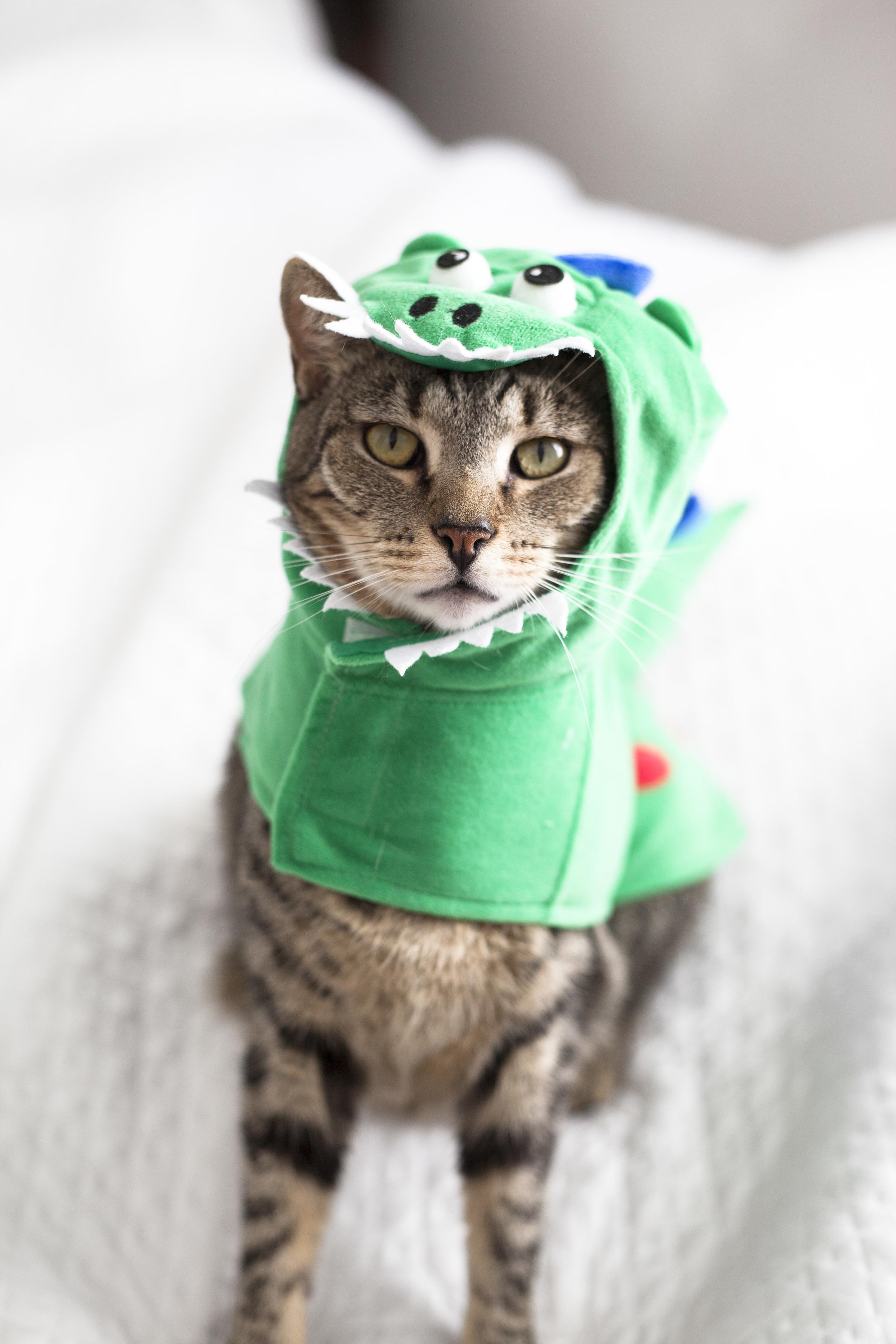 cat in a dragon costume
