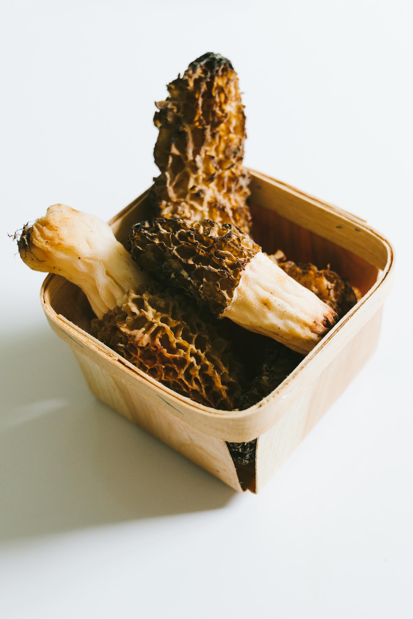 morrell mushrooms