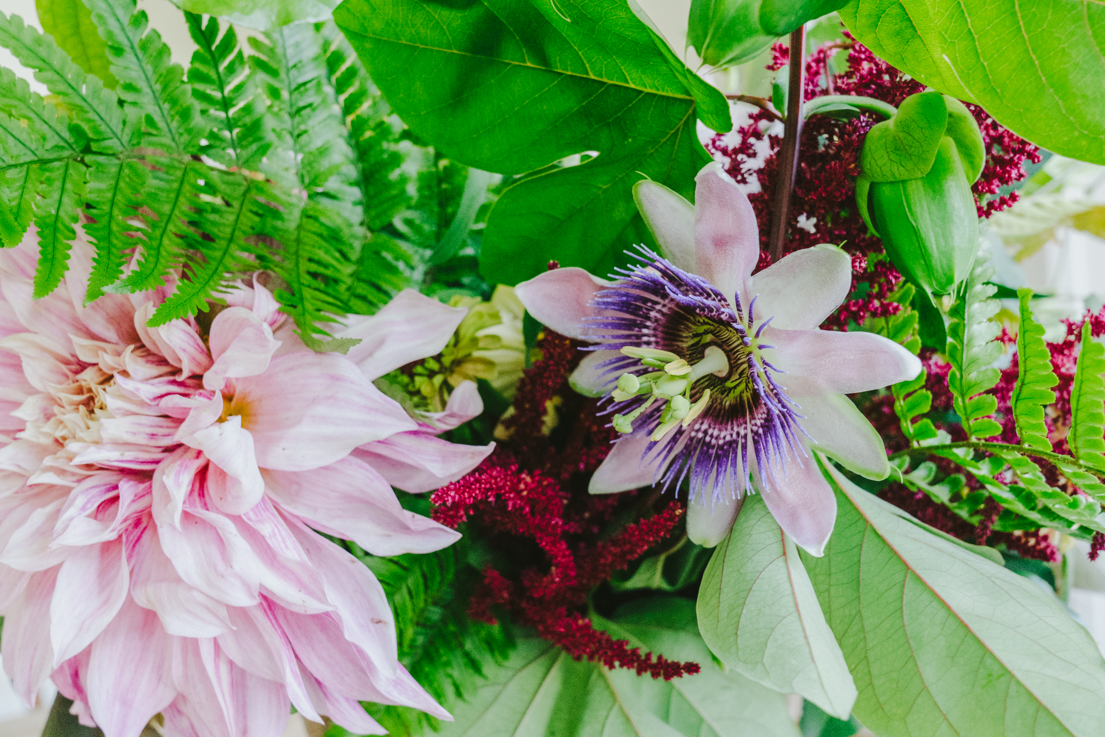 virginia passion flower