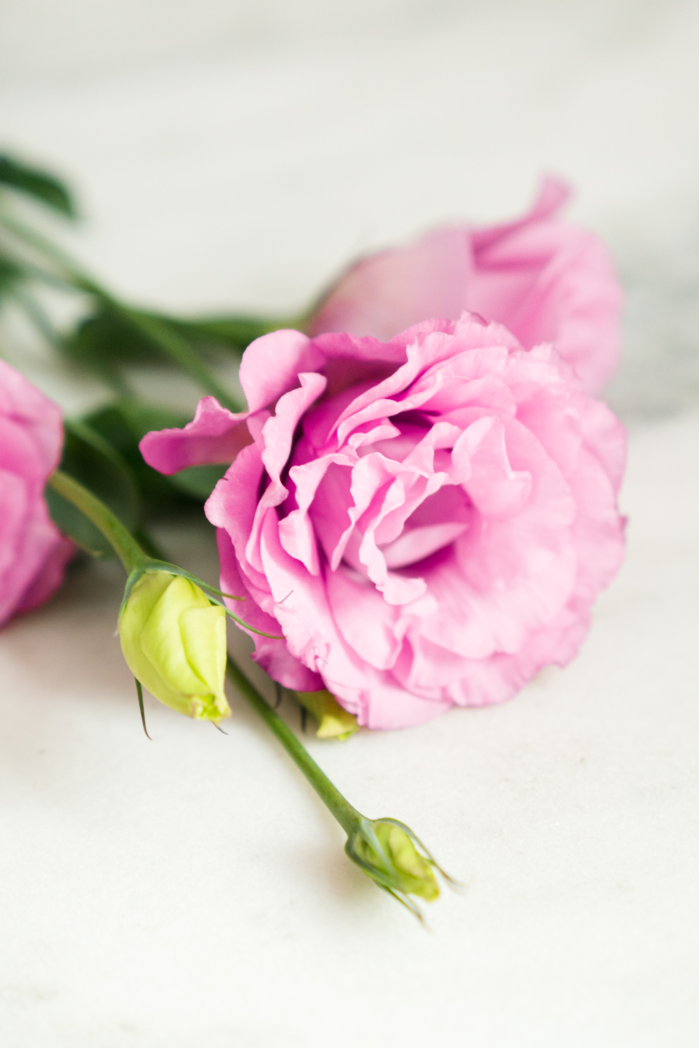 lizianthus flower