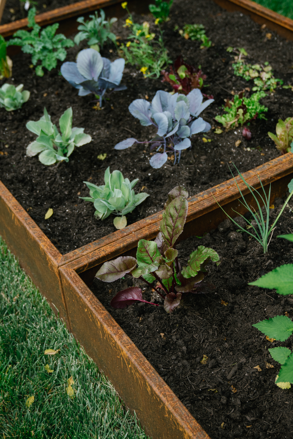 Corten Steel: A longer lasting, more modern alternative to wood raised gardening beds
