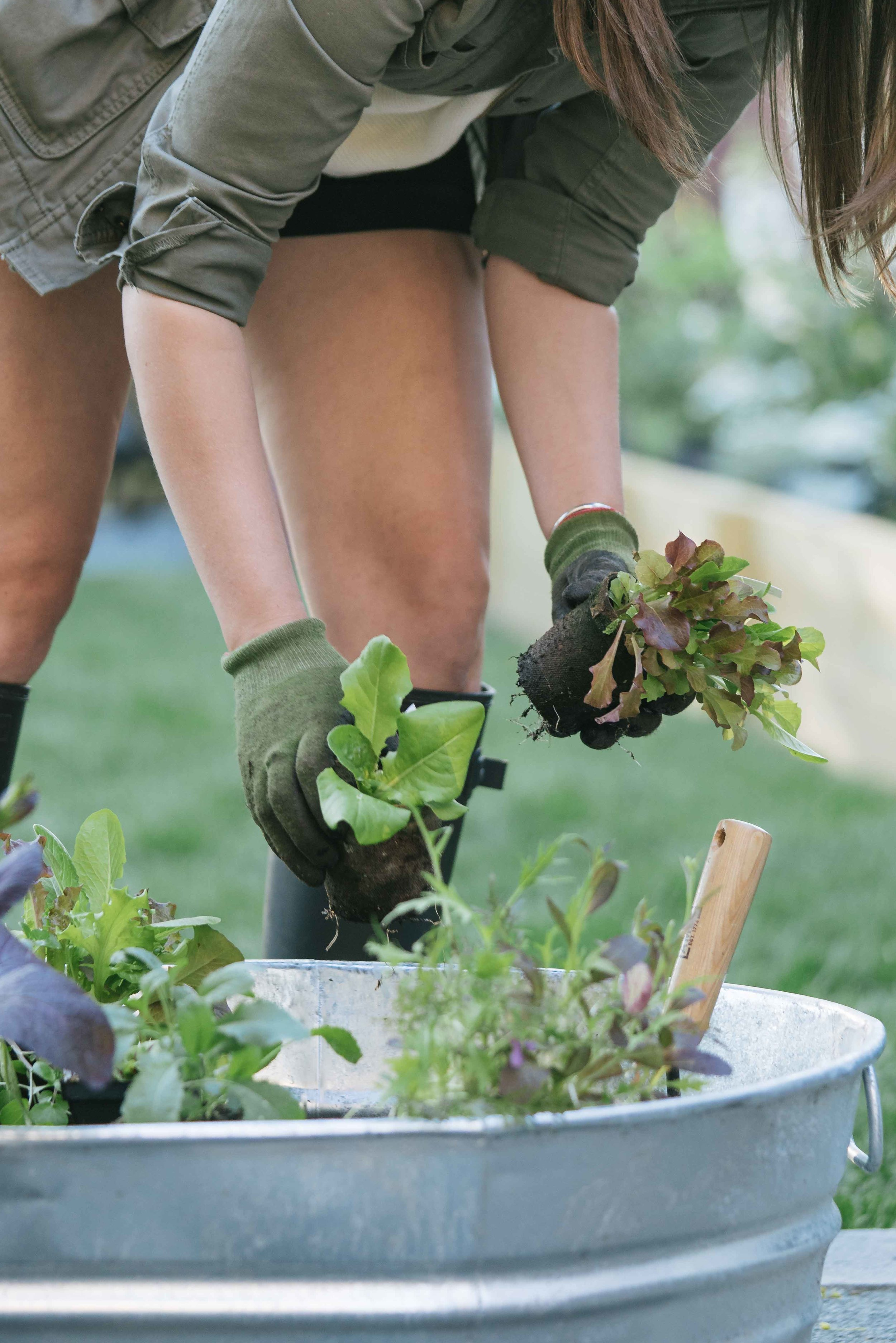How to Grow Your Own Greens and Lettuce