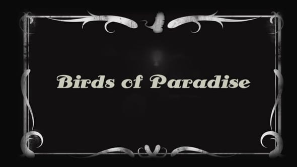 Birds of Paradise <br>By Mladan Jurkovic