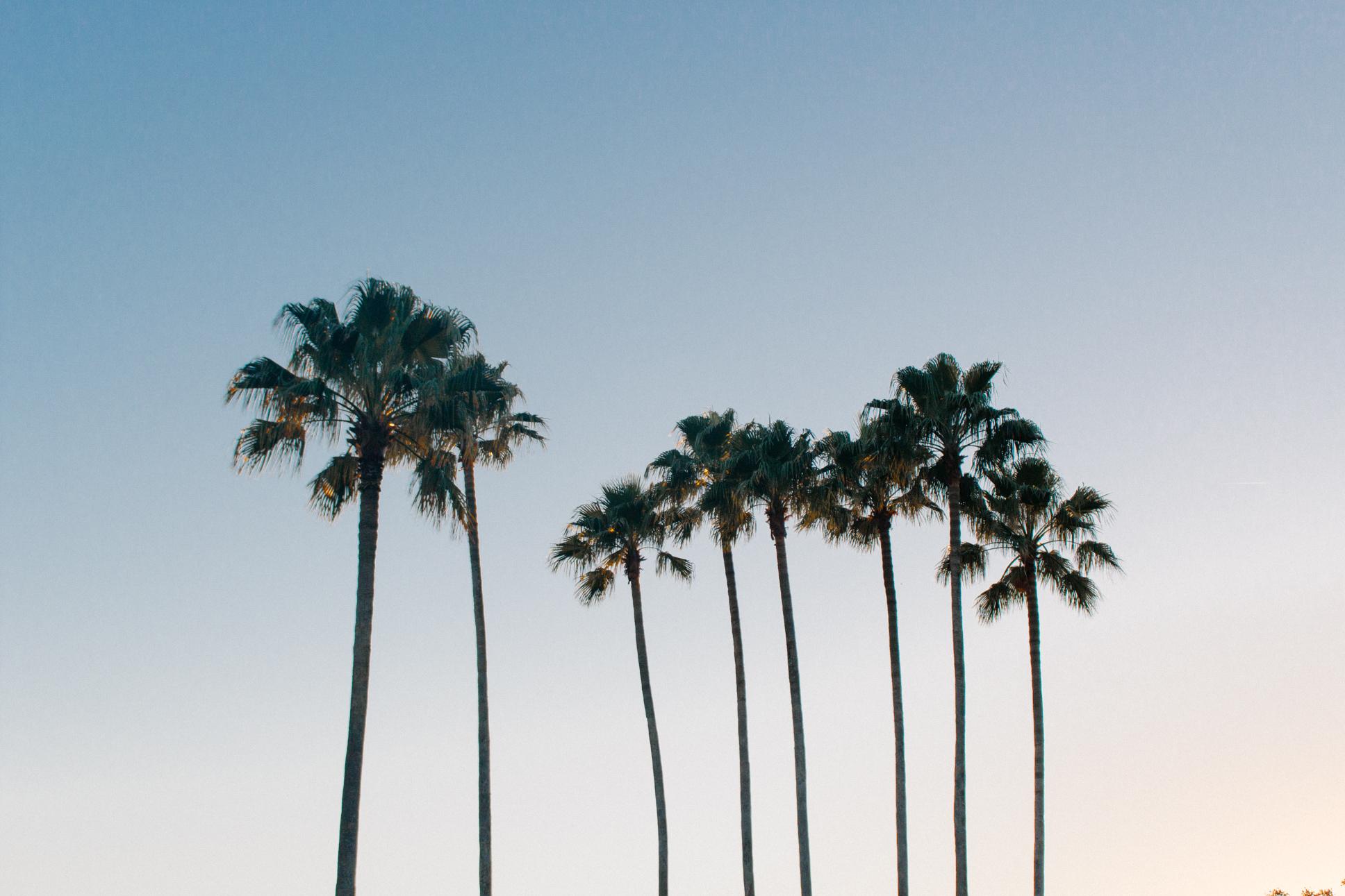 orlando-palm-trees