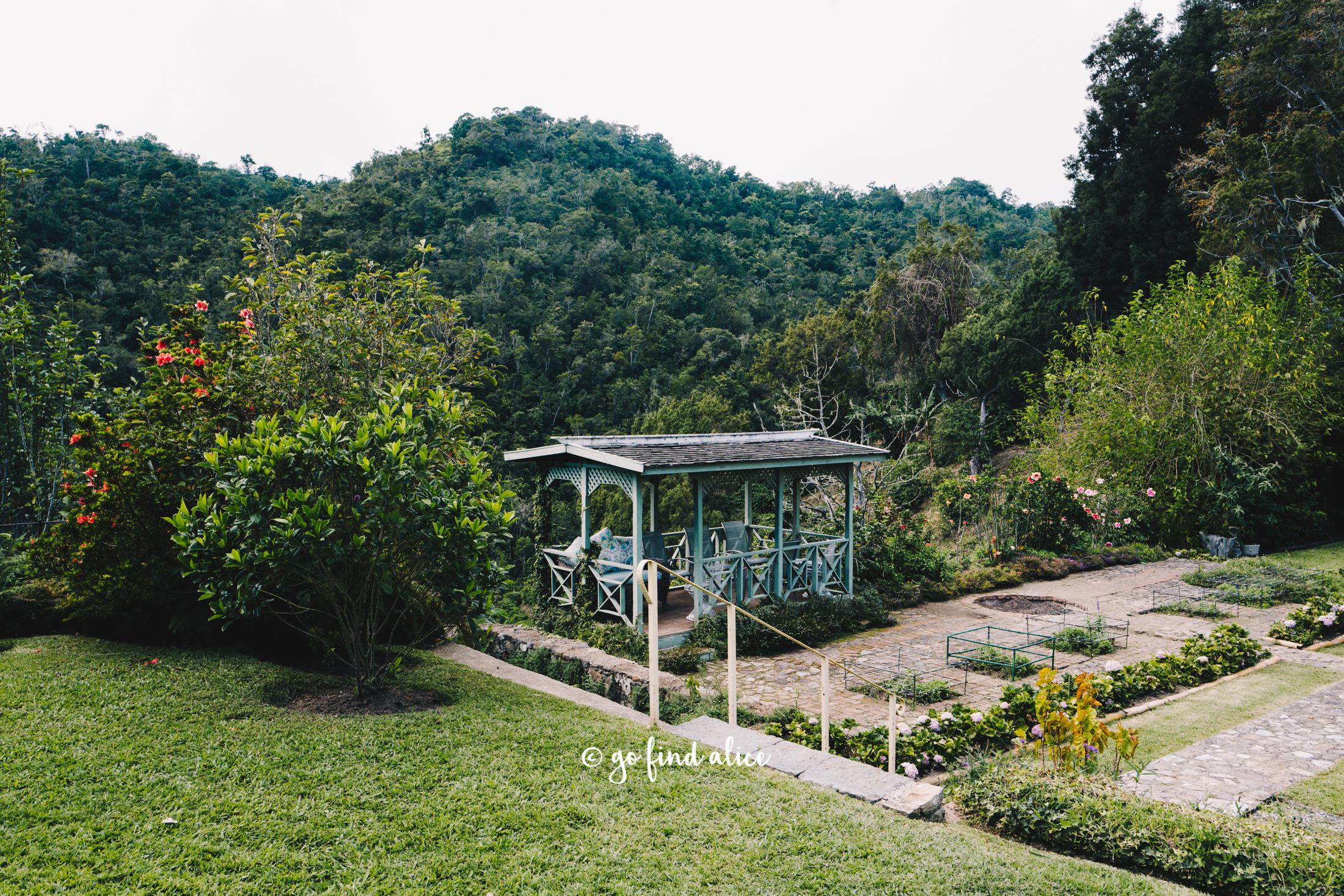 blue-mountain-coffee-clifton-estate