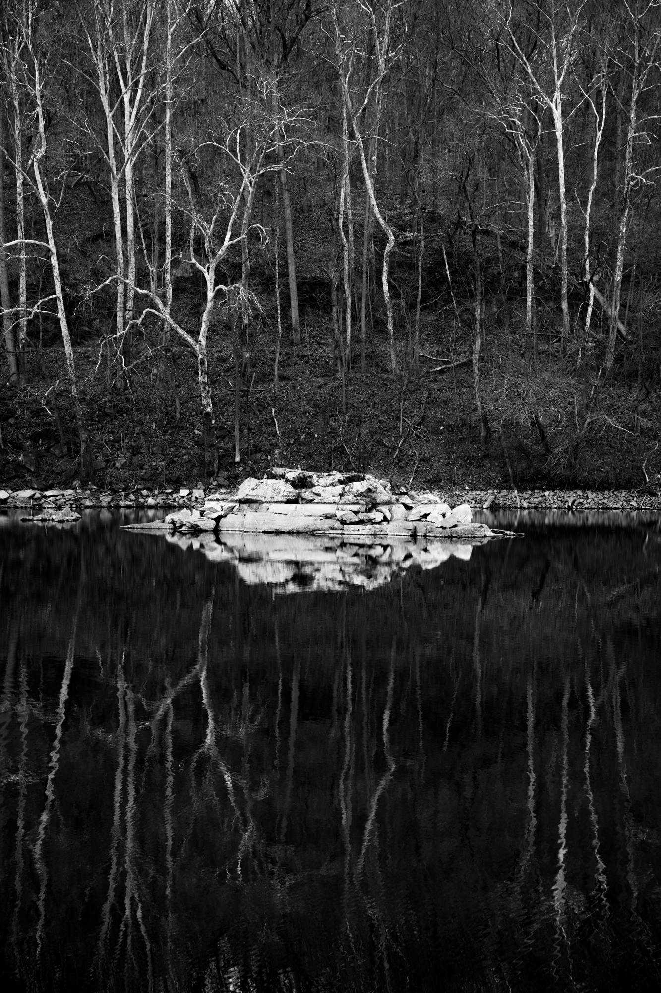 Water in the C&O Canal was very still, giving perfect reflections of the bright yet bare tree trunks across the canal.