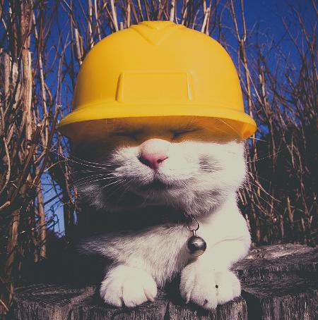 Style-Save-Us-Construction-Cat.jpg