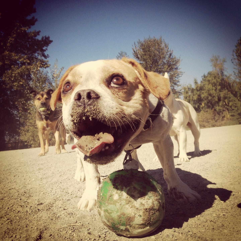 Fletcher at the dog park.JPG