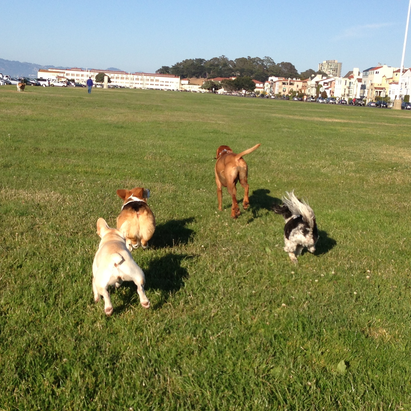 pups at san fran marina.jpg
