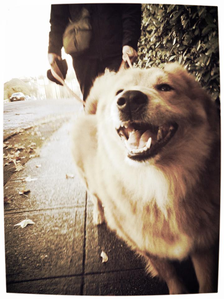 Queen Anne Dog Walking 98109