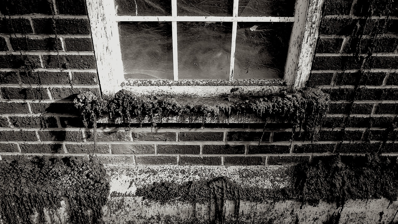 Wax window- photo by Angie Dixon- Illuminate Productions