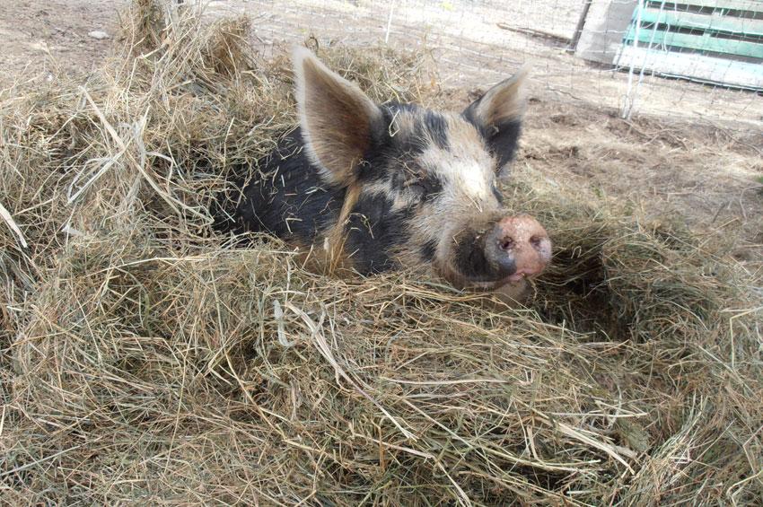 Pasture Raised Pork.JPG
