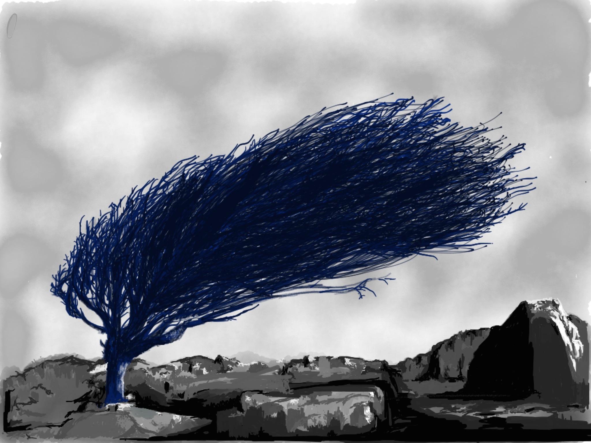 hawthorne illustration by rachel winner