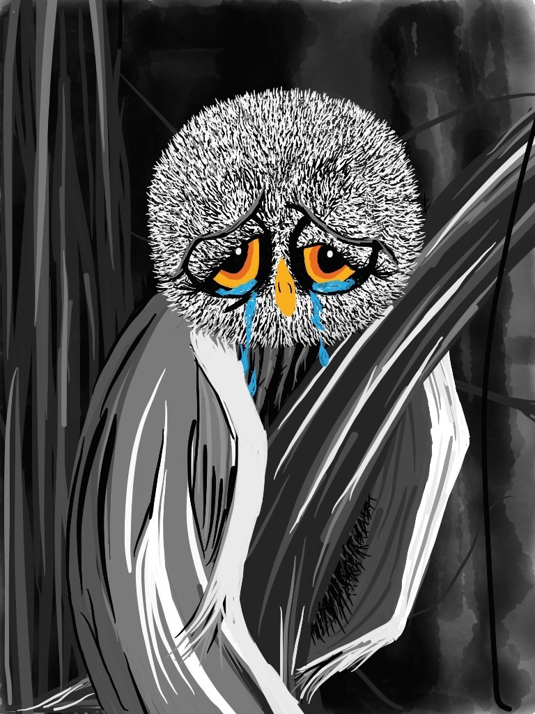 sad owl illustration by rachel winner