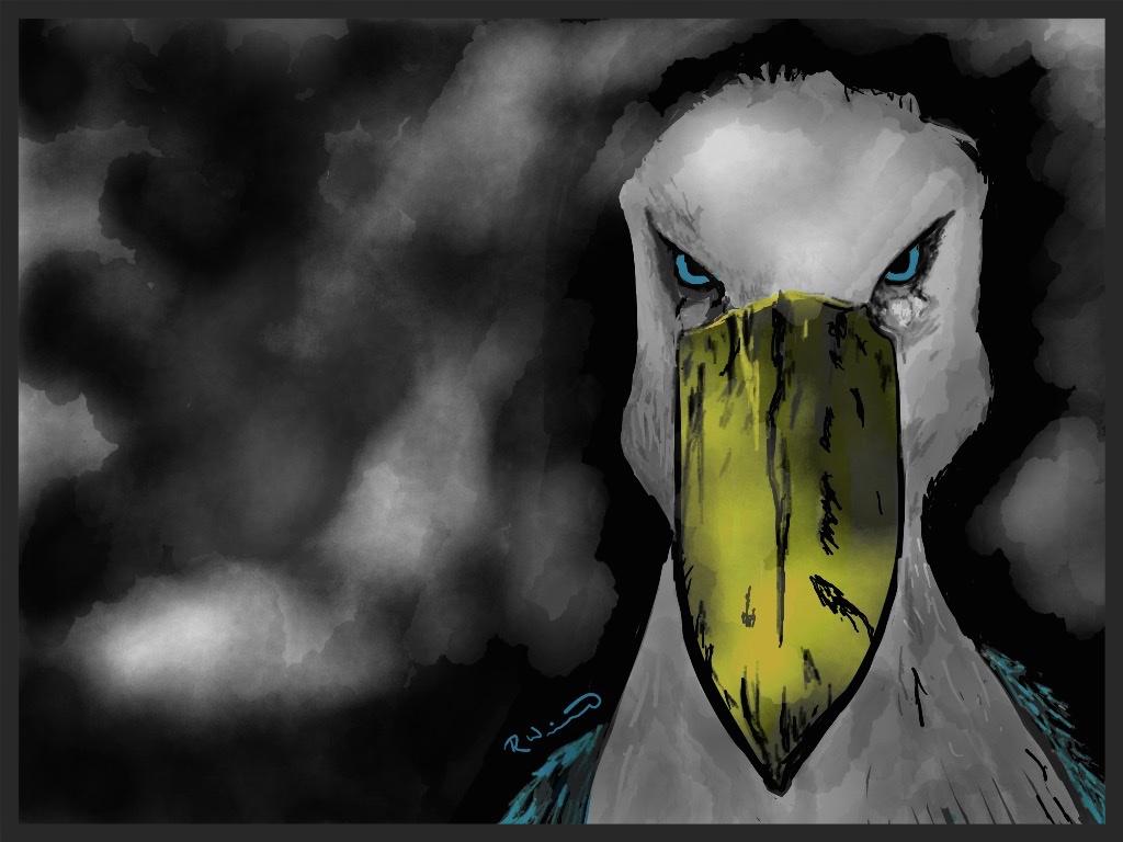 angry shoebill illustration by rachel winner