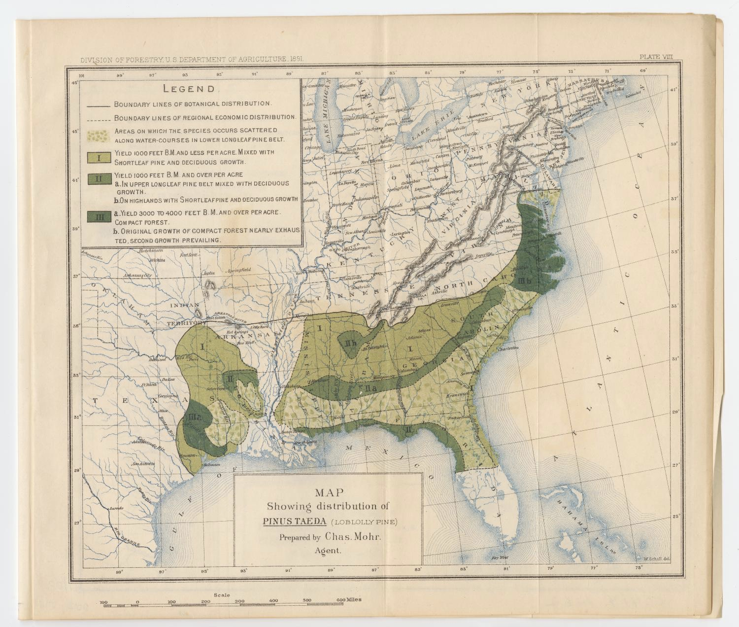 Map Showing Distribution of Pinus Taeda (Lobolly Pine) in 1891 from the Division of Forestry US Department of Agriculture