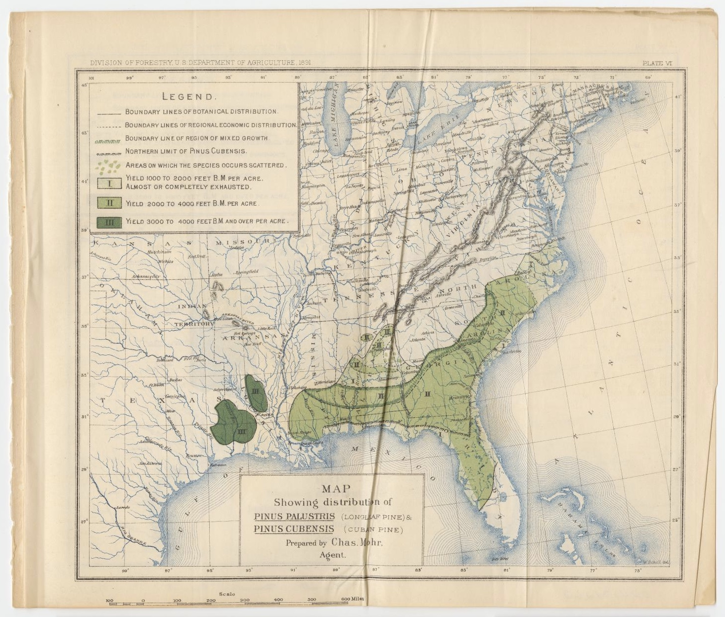 Map showing distribution of Pinus Palustris (Longleaf Pine) & Pinus Cubensis (Cuban Pine) in 1891 by the Division of Forestry US Department of Agriculture