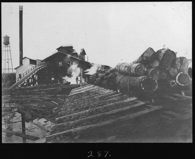 S. P. 287 Hardwood Logs Unloading into Mill Pond