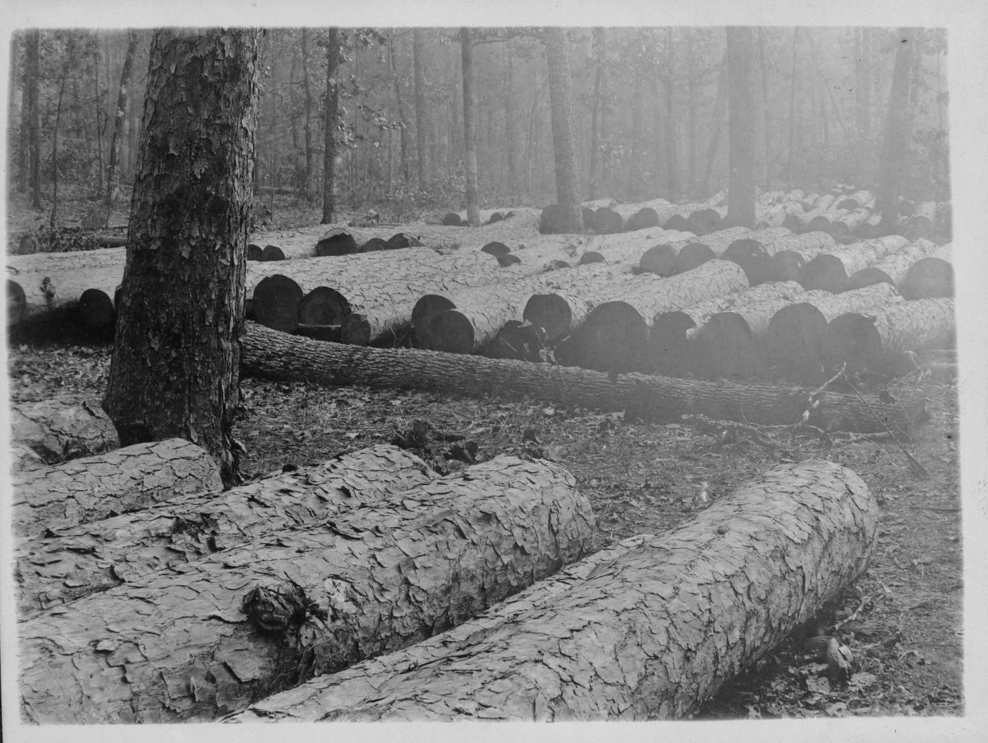 Tex109 Logs Piled Along Right of Way