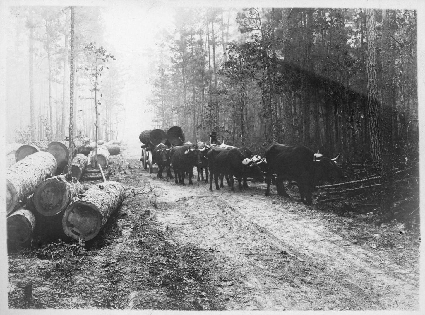Tex 111-Y oxen log cart