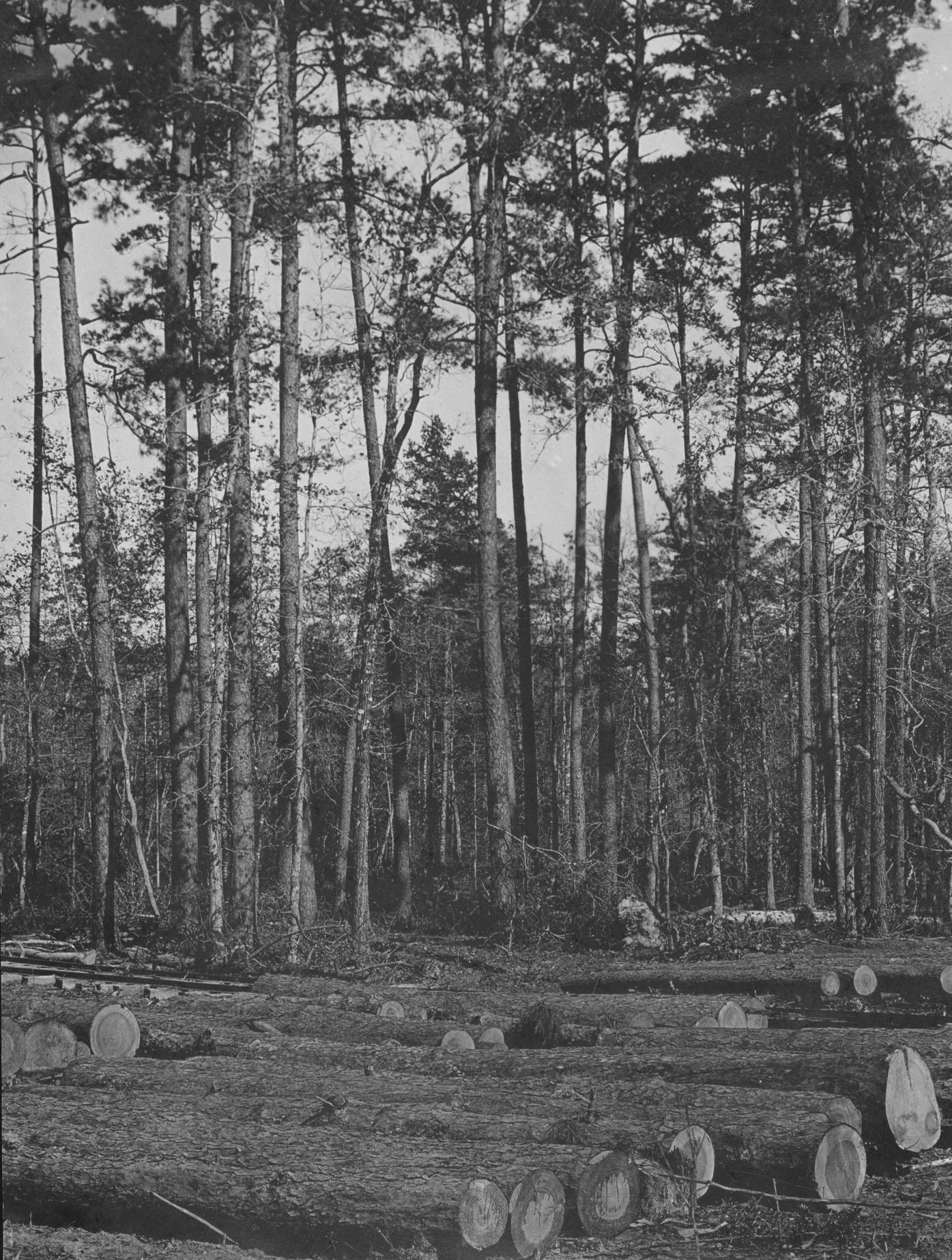 S. P. 336 Camp 1 Log Ramp and Cut Over Pine