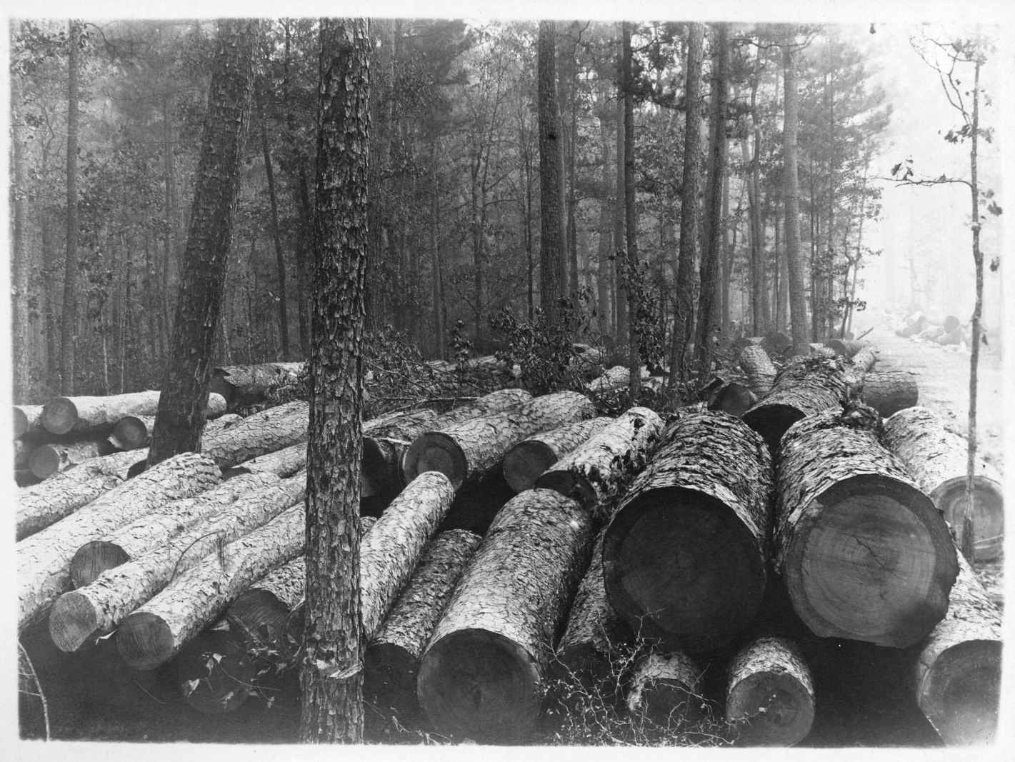 Tex112 Logs Along Right of Way