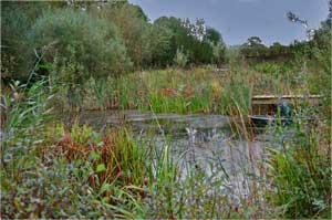 pond1.jpg