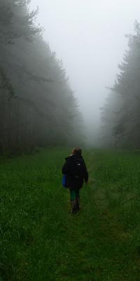 Walking through misty woods
