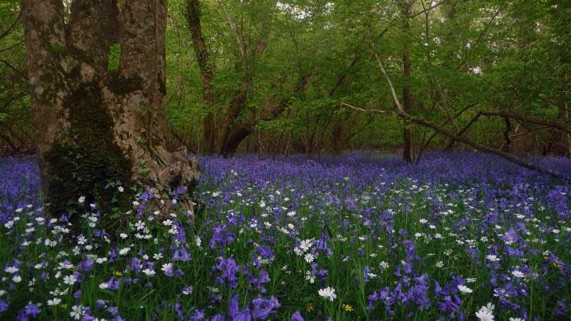Blue-Bell-near-Bonhays-Meditation-and-Retreats.jpg
