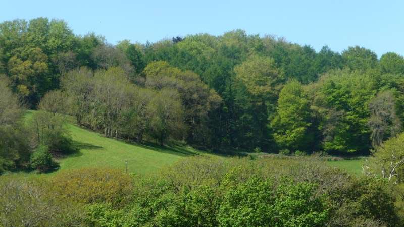 Bonhays-Meditation-and-Retreats,-bluebell-woods-behind-Bonhays.jpg