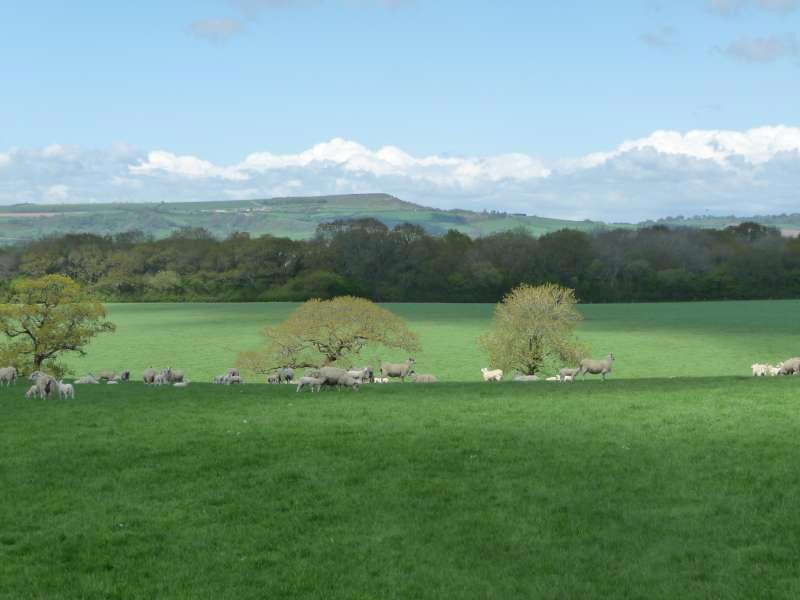 more-lovely-walks-from-Bonhays-Bonhays-Meditation-and-Retreats.jpg