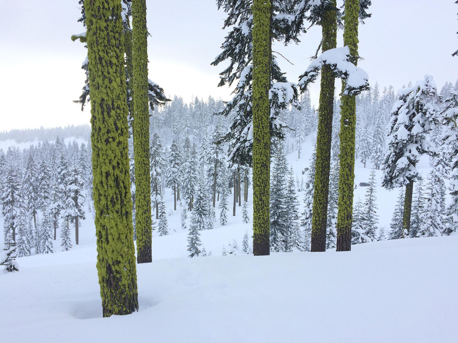 treesmosssahs.jpg