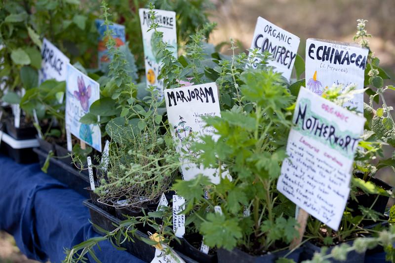 Springfed Farm Organic Nursery Starts