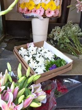 SF Gardenias.jpg