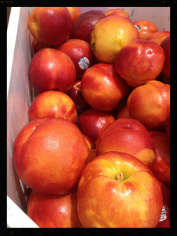 These are scrumptious yellow nectarines that we found at a local farm stand near the blueberry farm. 25 pounds for only $9!! I love living in California!!