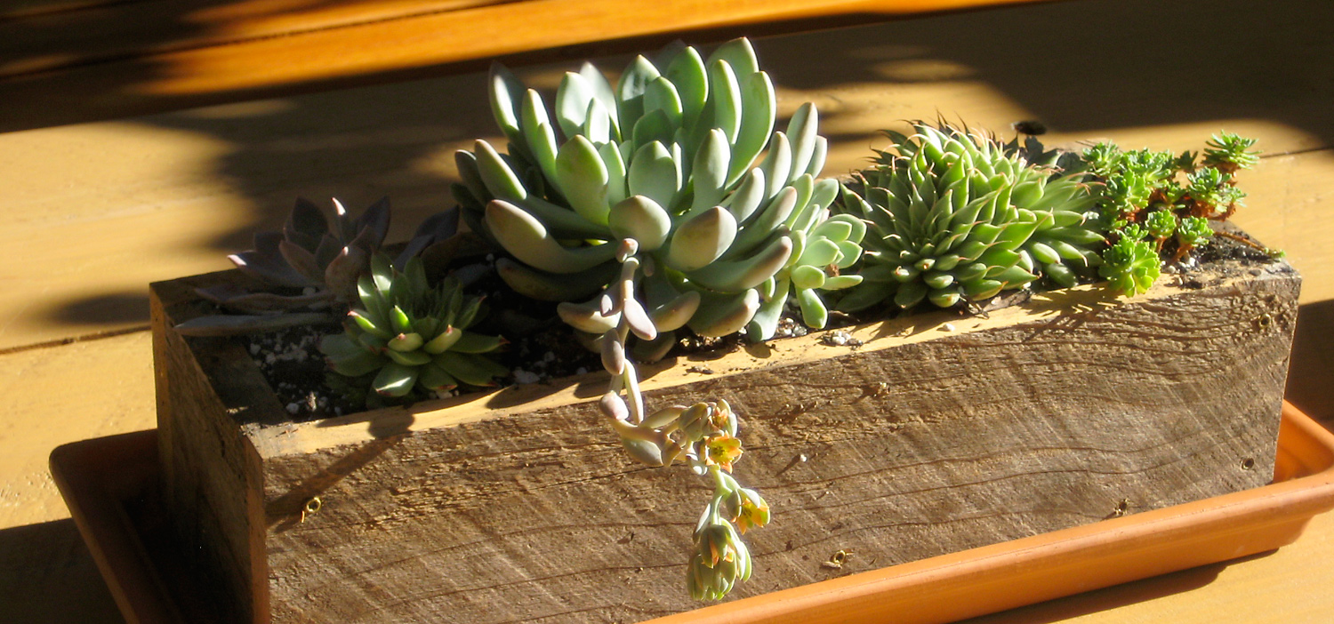 Small succulent planter for outdoor table