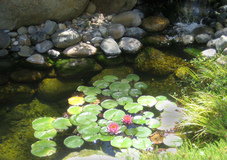 Water garden close-up