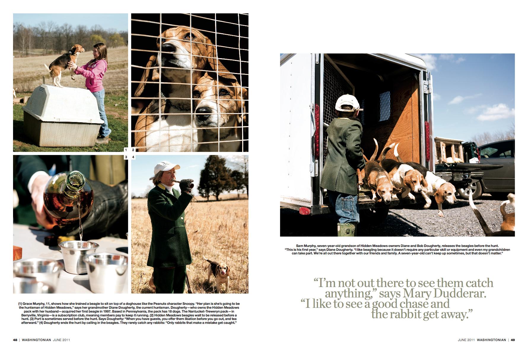 Beagles2.jpg