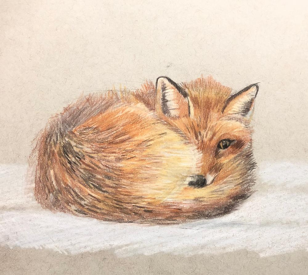 carpenter_fox drawing.png