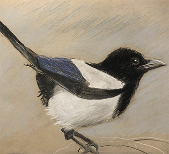 JULIA CARPENTER birds in charcoal+pastel.png